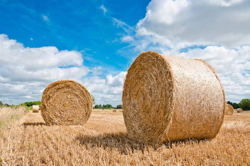 hay bales are easy to maintain for archery targets